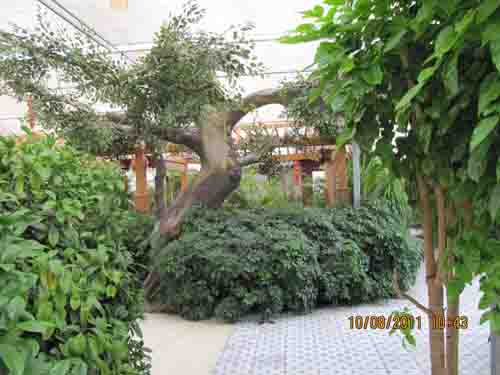 甘肃园林景观工程 兰州假山假树设计制作